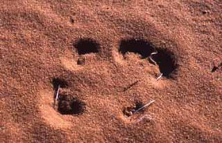 spuren im sand englisch